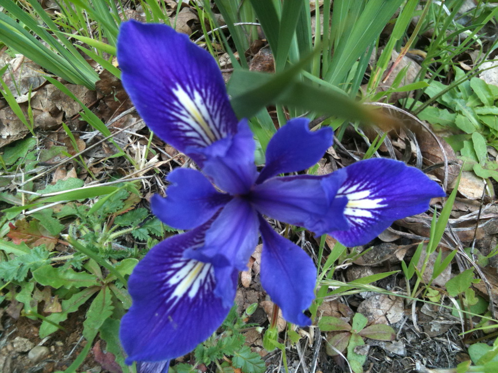 Angel Island Wildflowers