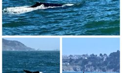Hop on our new Whale Watching Nature Cruises taking place on Saturday mornings this season.