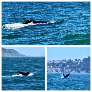 Whale Watching Tours with Angel Island Ferry